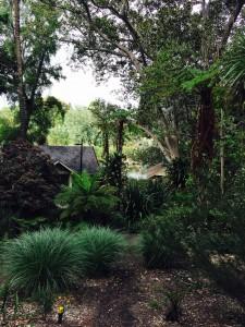Melbourne botanisk have urskov